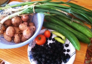 harvest blackberries, potatotes, cukes