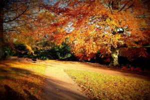 autumn_scene (1)