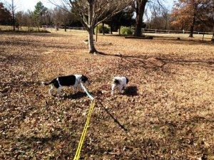 Bailey - Dottie double lead