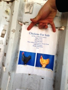 feed store chicken sign
